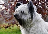 La-triste-historia-del-perro-que-esperó-eternamente-a-su-amo