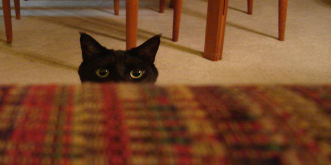 curiosidades gatos negros_660x330