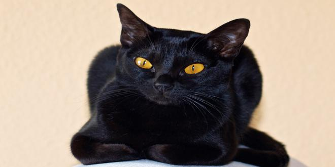 gatos negros curiosidades (2)_660x330