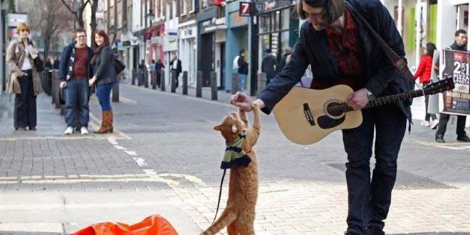 A Street cat named Bob historia