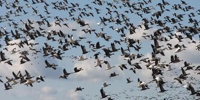brujula aves orientacion