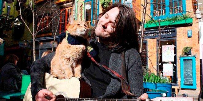 musico callejero gato