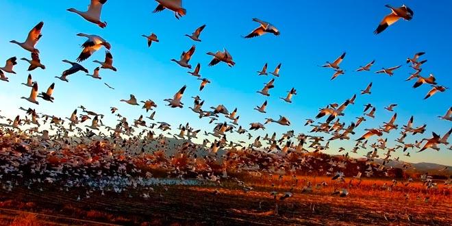 orientacion aves migracion