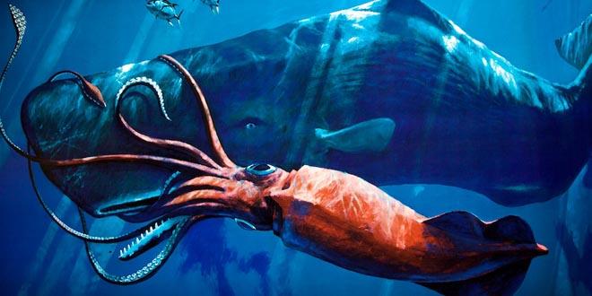calamar gigante cachalote