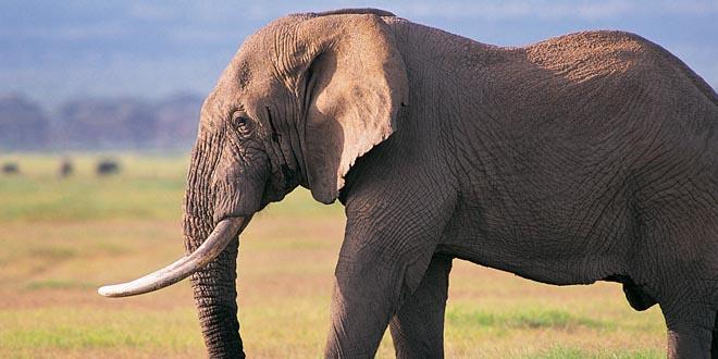 elefantes inteligentes
