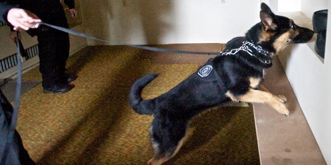 perros olfato detectar enfermedades