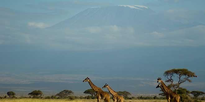 Kilimanjaro-curiosidades