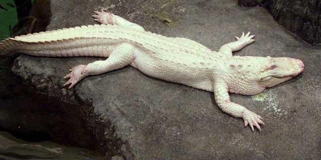 animales-albinos