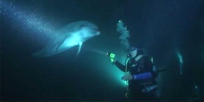 Delfín submarinista