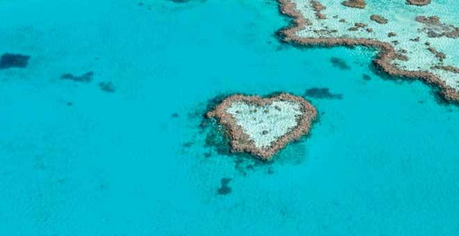Hardy-Reef,-en-la-Gran-Barrera-de-Coral-australiana