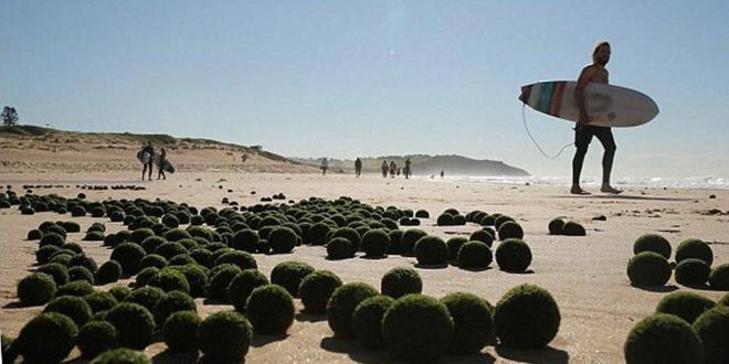 playa australia huevos alienígenas_660x330